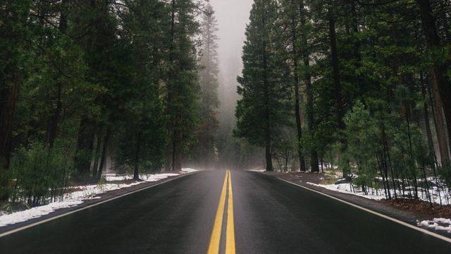 forest roadtrip